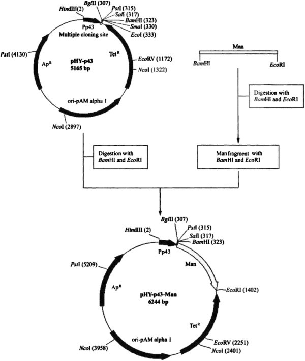 Comparison Of Expression Systems For The Extracellular Production Of