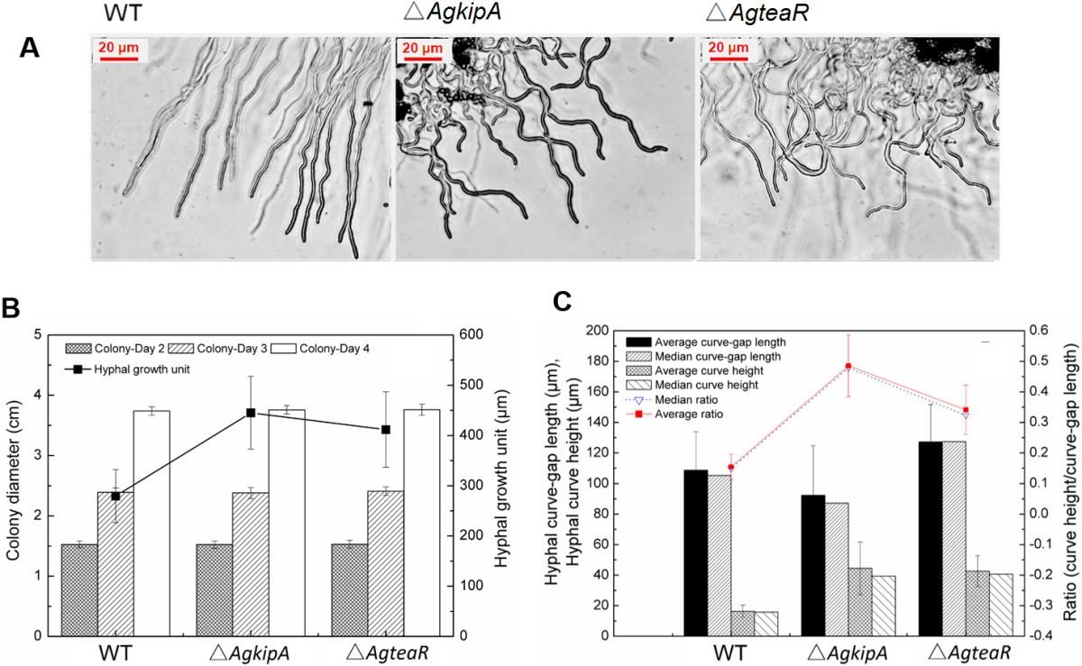 Genetically Shaping Morphology Of The Filamentous Fungus Aspergillus 2015 Tao 50cc Engine Diagram Figure 1