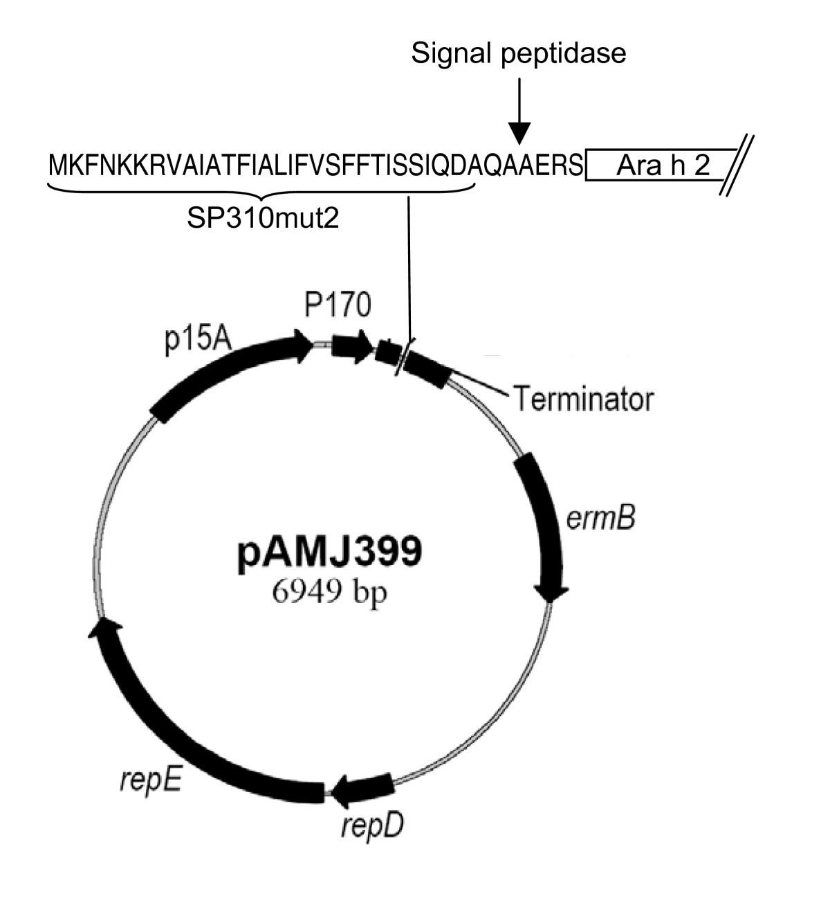 Production Of Recombinant Peanut Allergen Ara H 2 Using Lactococcus Prokaryotic Cells Ib Biology Ms Elise Figure 1