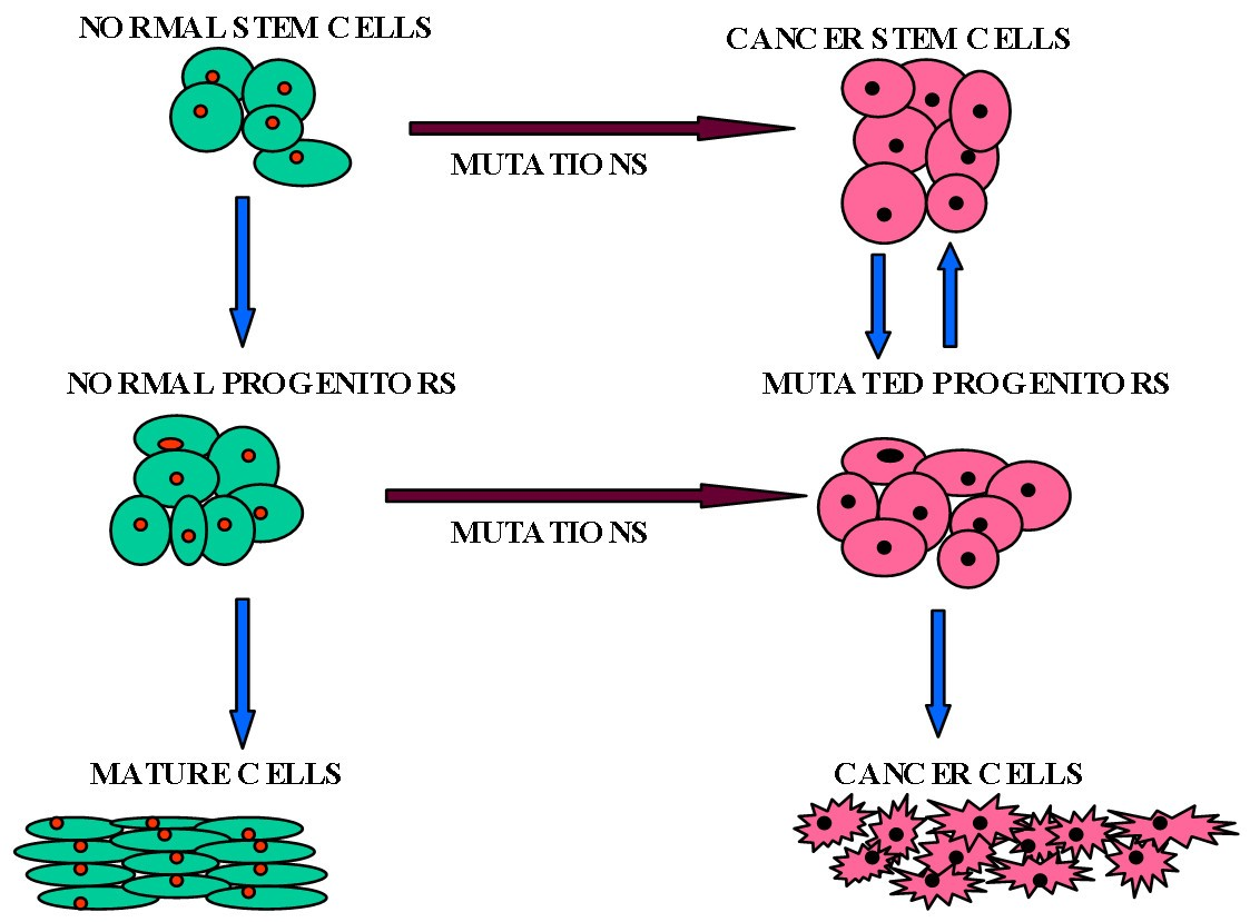 role of stem cells in cancer therapy and cancer stem cells a review