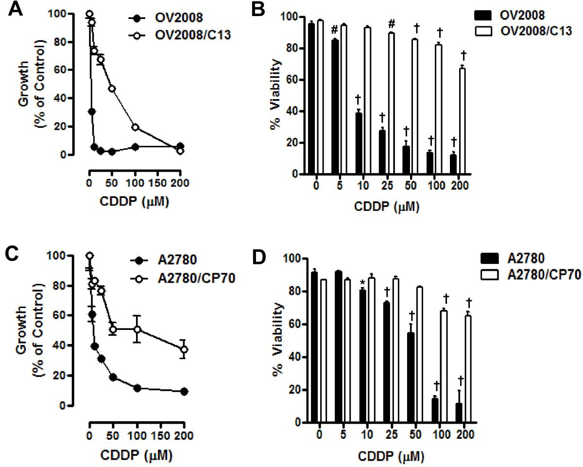 Resistance To Cisplatin Does Not Affect Sensitivity Of