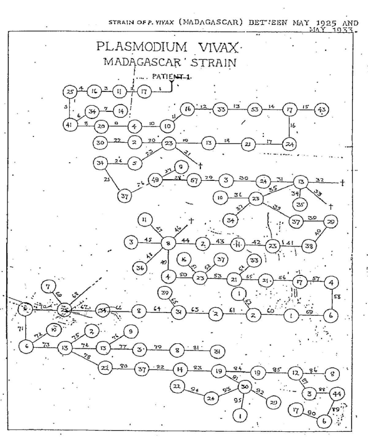 determinants of relapse periodicity in plasmodium vivax malaria Business Office Manager Construction Resume figure 4
