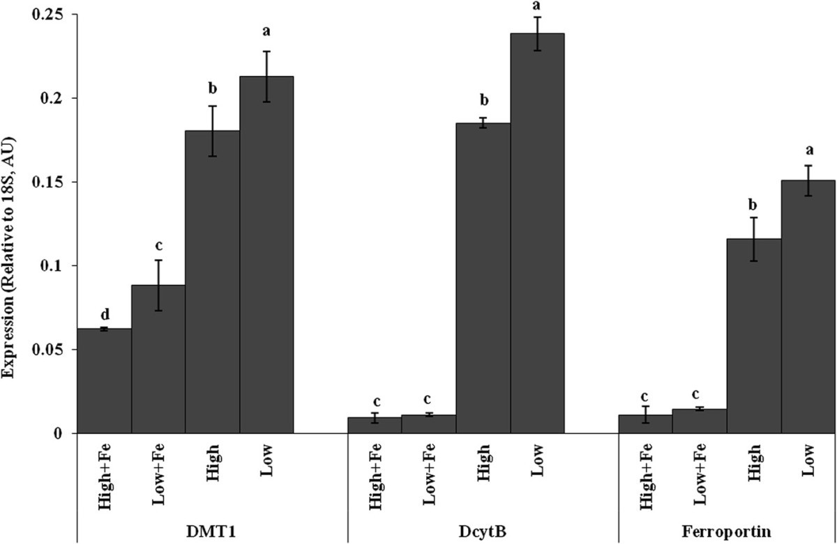 RETRACTED ARTICLE: High bioavailablilty iron maize (Zea mays L