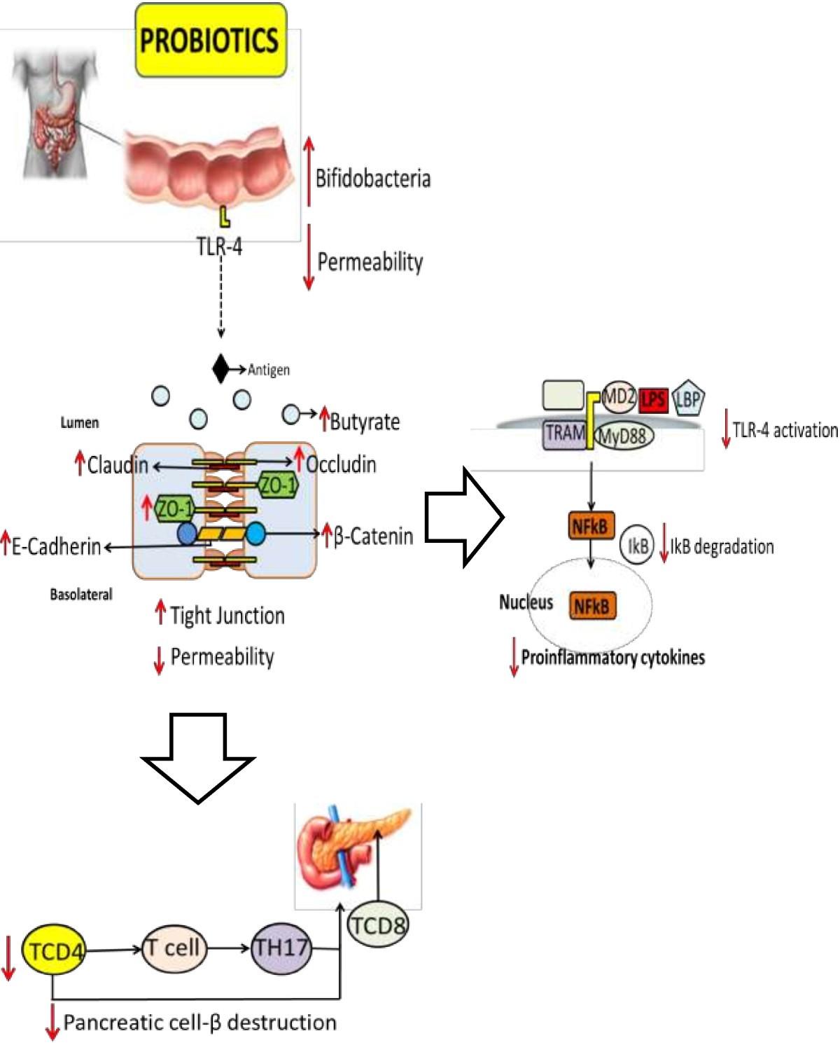 gut microbiota probiotics and diabetes nutrition