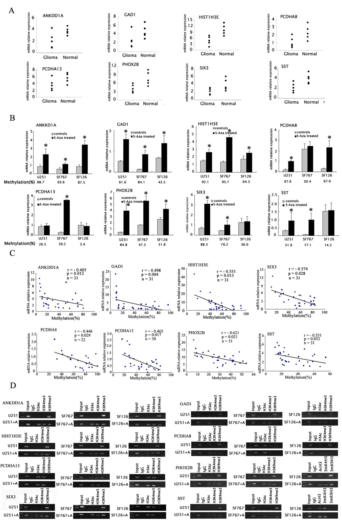 MiR-185 Targets the DNA Methyltransferases 1 and Regulates Global