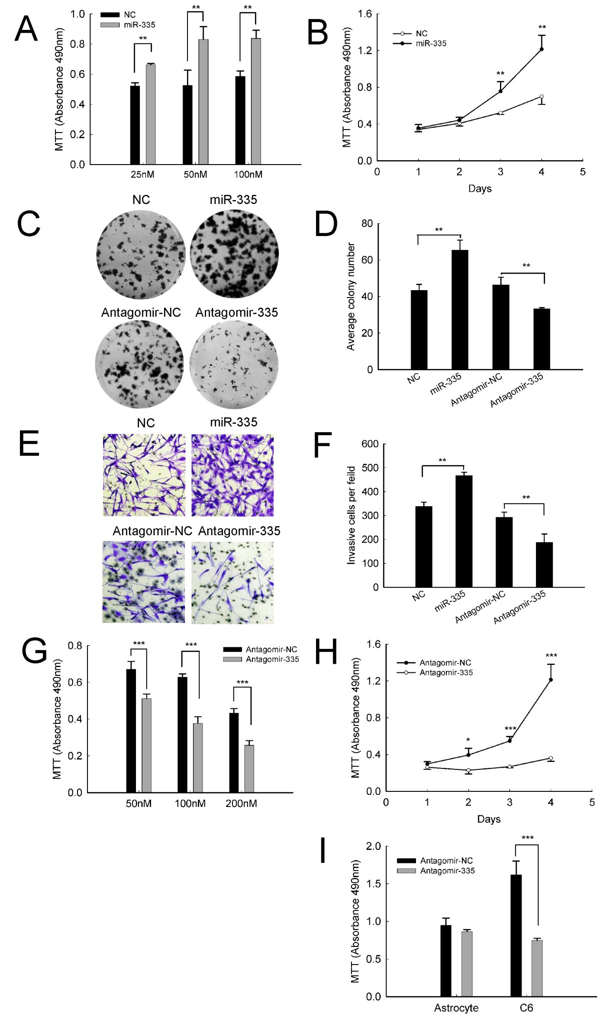 Targeting Oncogenic Mir 335 Inhibits Growth And Invasion Of G2 Schematicjpg 984 Kb 114 Views Figure 2