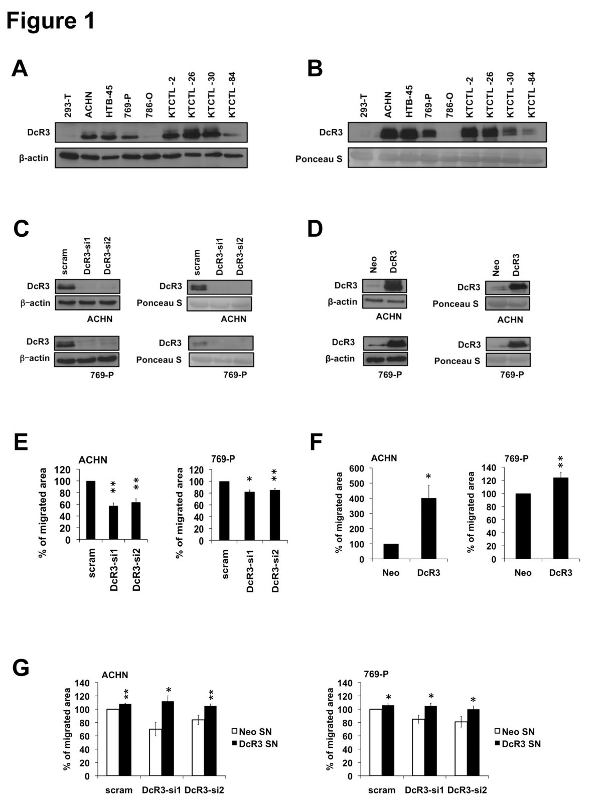 the soluble decoy receptor 3 is regulated by a pi3k dependent