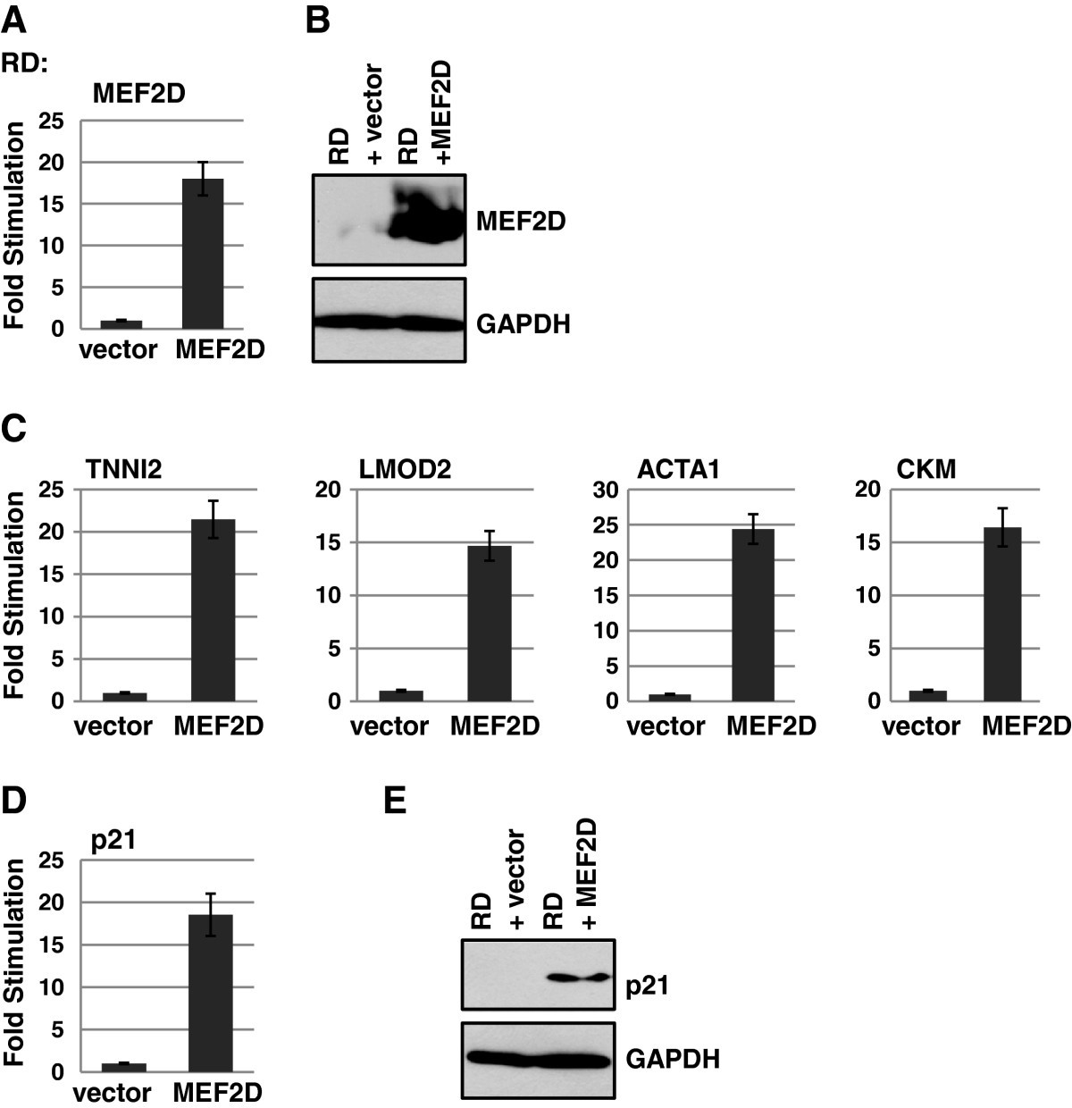 Loss Of Mef2d Expression Inhibits Differentiation And Contributes To Go Back Gt Gallery For Parallel Circuit Definition Kids Figure 4