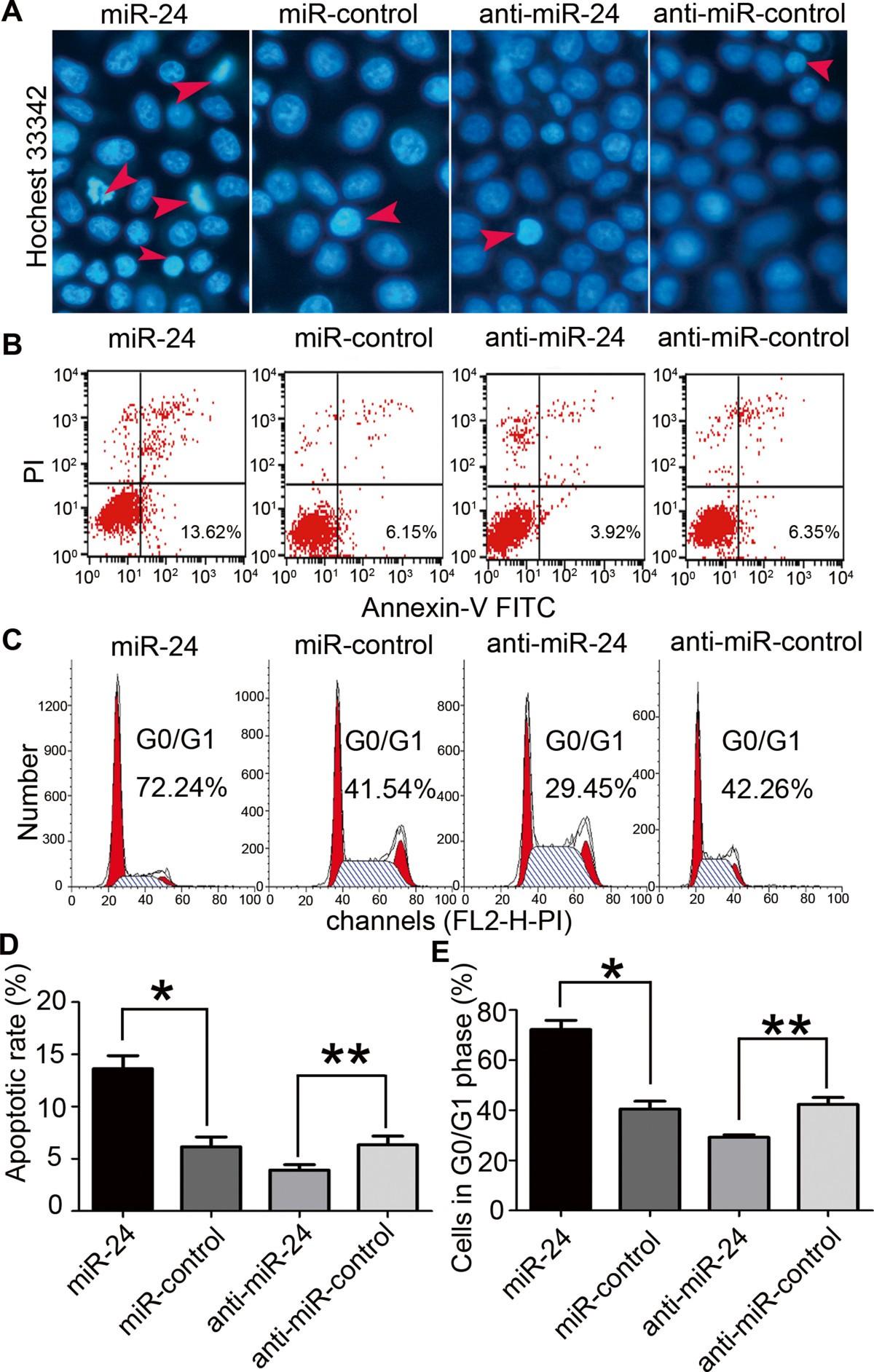 Tumor Suppressor Mir 24 Restrains Gastric Cancer Progression By 10 Opti Art Rings Figure 3