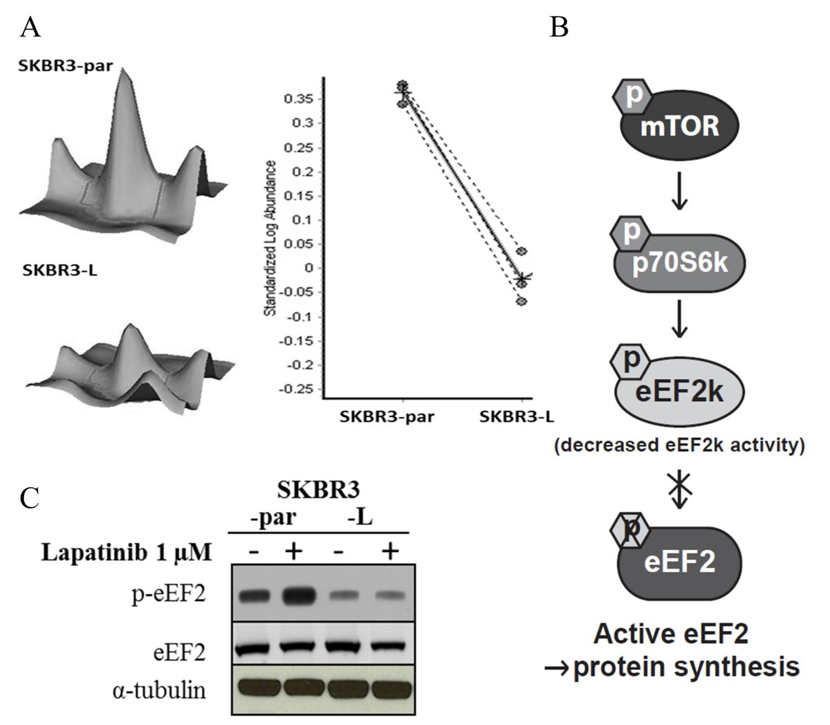Pp2a Inhibition Overcomes Acquired Resistance To Her2 Targeted Sp Schematicjpg 630 Kb 2733 Views Figure 2