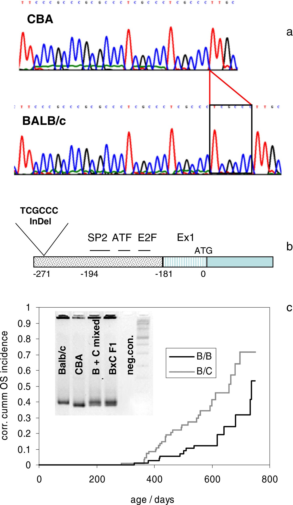 a rb1 promoter variant with reduced activity contributes to
