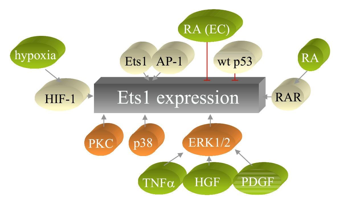 The Biology Of Ets1 Proto Oncogene Molecular Cancer Full Text Good A C System Diagram Callie Broaddus39s Blog Figure 5