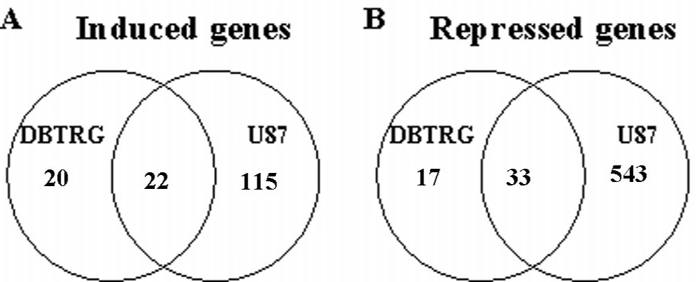 gene expression time