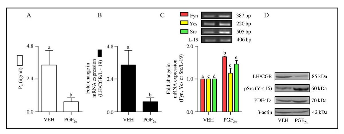 d31a9f2b25f28f Involvement of Src family of kinases and cAMP phosphodiesterase in ...