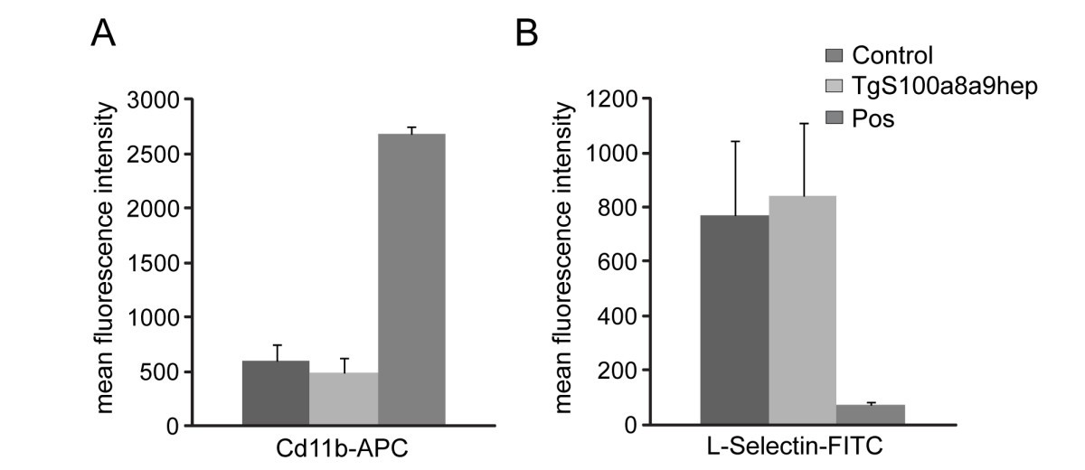 Hepatocyte Specific S100a8 And S100a9 Transgene Expression