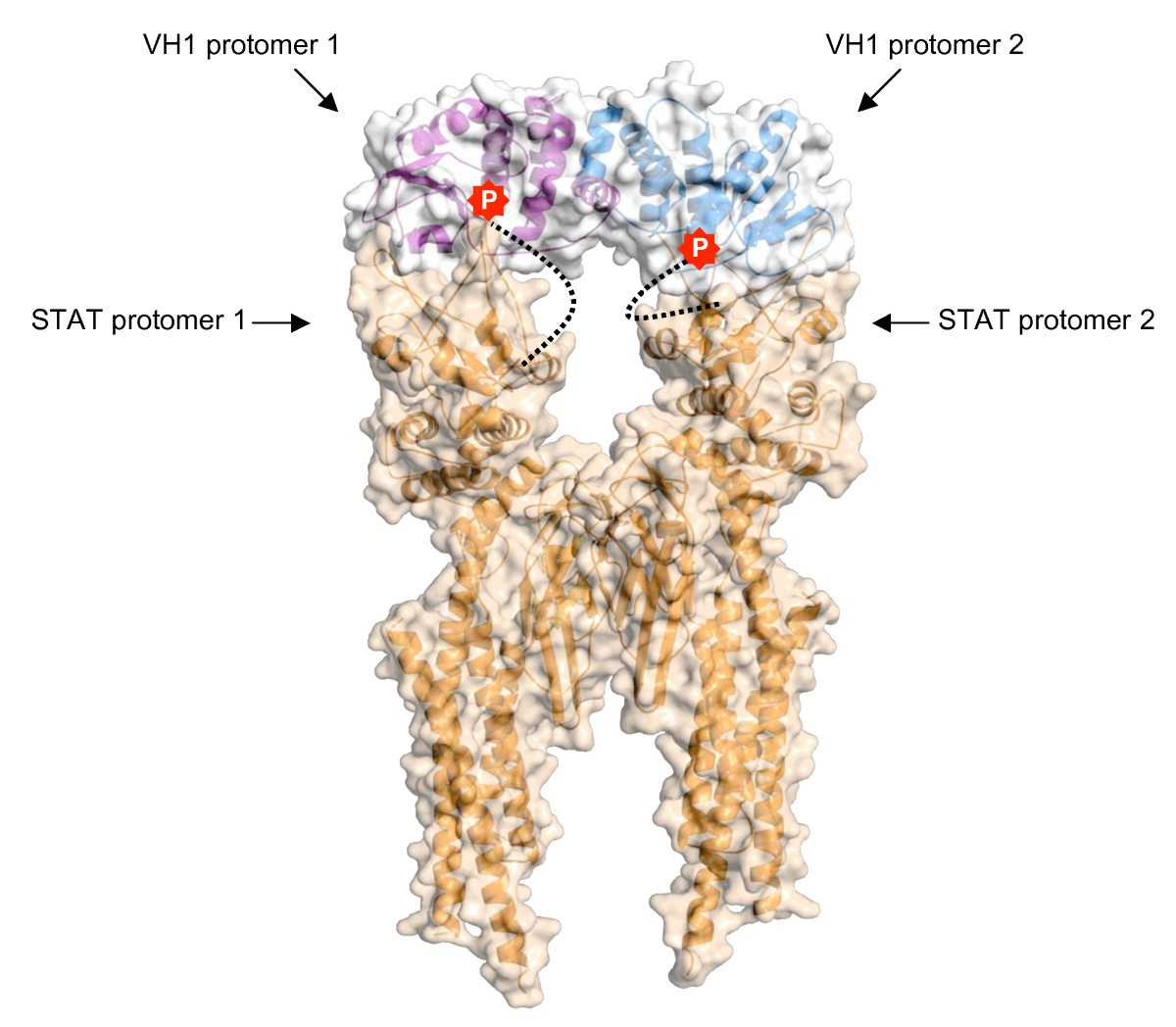 Phosphorylation Meets Nuclear Import A Review Cell Communication Good C System Diagram Callie Broaddus39s Blog Figure 5