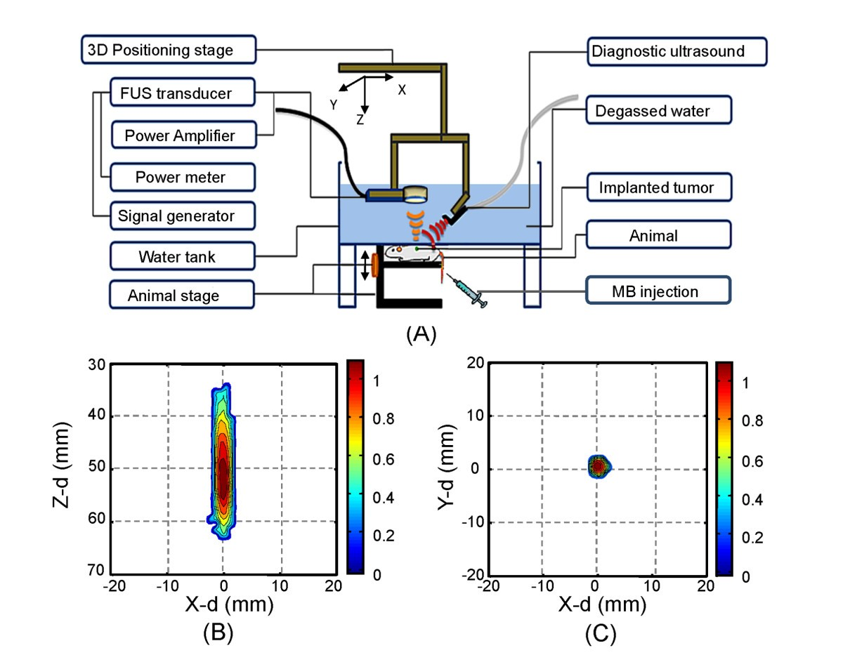 Low-pressure pulsed focused ultrasound with microbubbles promotes an on