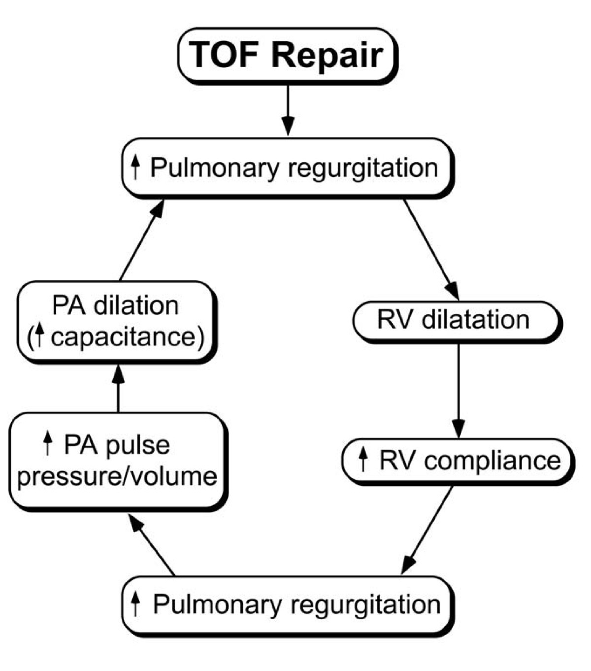 Repaired tetralogy of Fallot: the roles of cardiovascular magnetic on retinopathy of prematurity pathophysiology, ankylosing spondylitis pathophysiology, bronchiolitis pathophysiology, pleural effusion pathophysiology, unstable angina pathophysiology, mitral valve stenosis pathophysiology, cushing's syndrome pathophysiology, meningitis pathophysiology, nephrotic syndrome pathophysiology, aspiration pneumonia pathophysiology, cardiac tamponade pathophysiology, typhoid fever pathophysiology, sarcoidosis pathophysiology, atrial flutter pathophysiology, umbilical hernia pathophysiology, alzheimer's disease pathophysiology, chronic obstructive pulmonary disease pathophysiology, mitral valve regurgitation pathophysiology, aortic stenosis pathophysiology, cardiogenic shock pathophysiology,