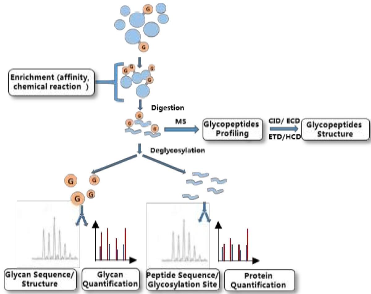 Proteomics study of cancer