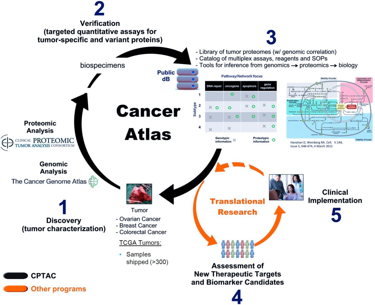 Proteogenomic Convergence For Understanding Cancer Pathways And Gibson Es 330 P90 Wiring Diagram Figure 2