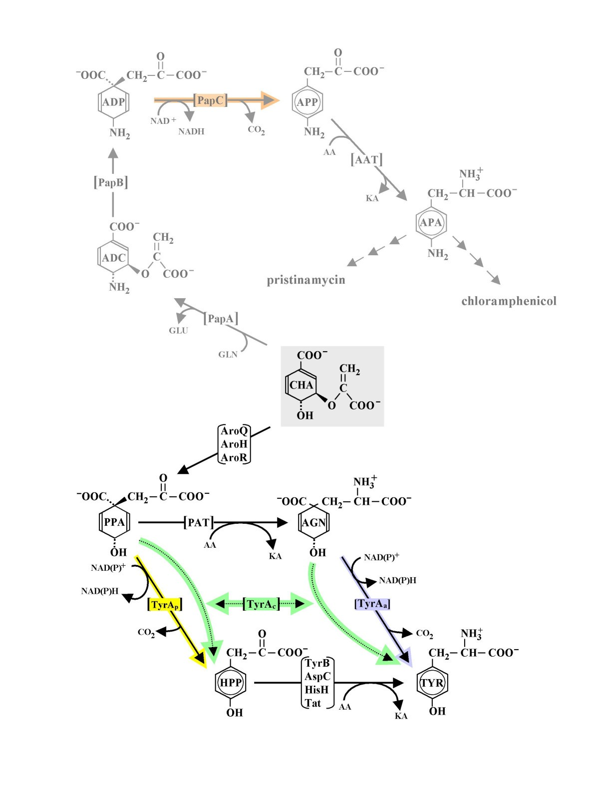 The Tyra Family Of Aromatic Pathway Dehydrogenases In Phylogenetic Figure 1 First Rf Amplifier Module A3 Schematic Diagram