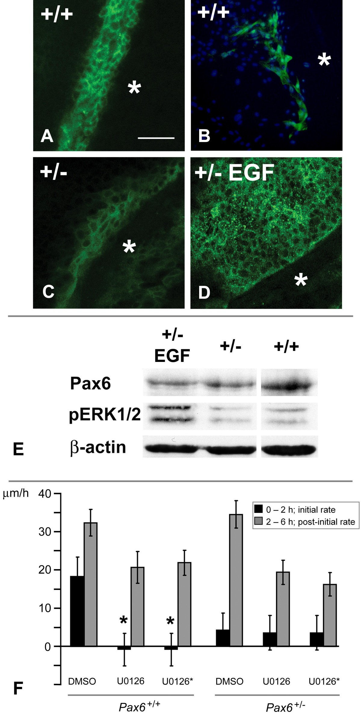The Roles Of Calcium Signaling And Erk1 2 Phosphorylation In A Pax6 Jacinto 6 Block Diagram Figure 7