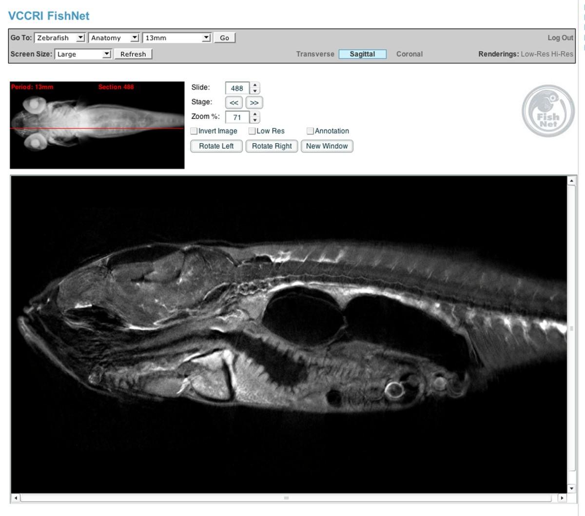 Fishnet An Online Database Of Zebrafish Anatomy Bmc Biology