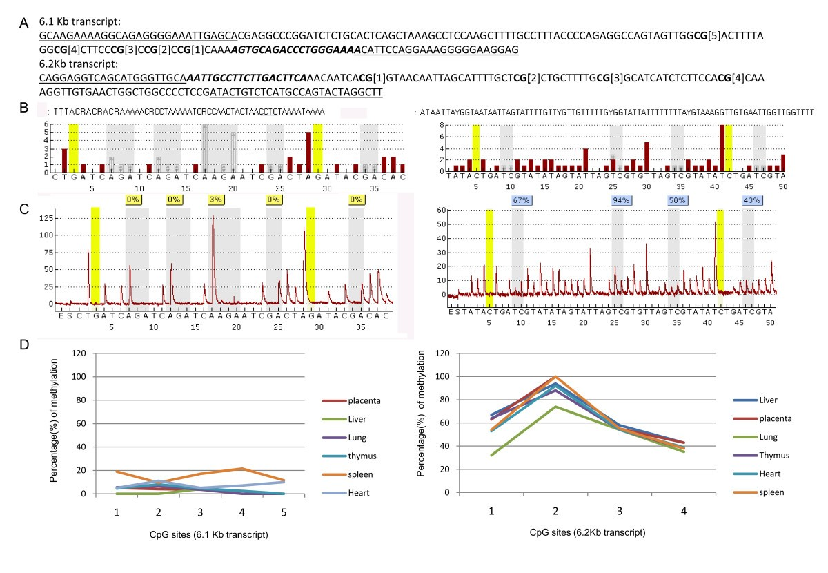 identification and characterizaation of three gs isoforms Cells were collected and 25 [micro]g mrna was used for rt-pcr 3 [micro]l of each cdna was used for pcr with alternative splicing detecting primer (35 cycles, 60[degrees]c annealing temperature) gapdh was used as control.