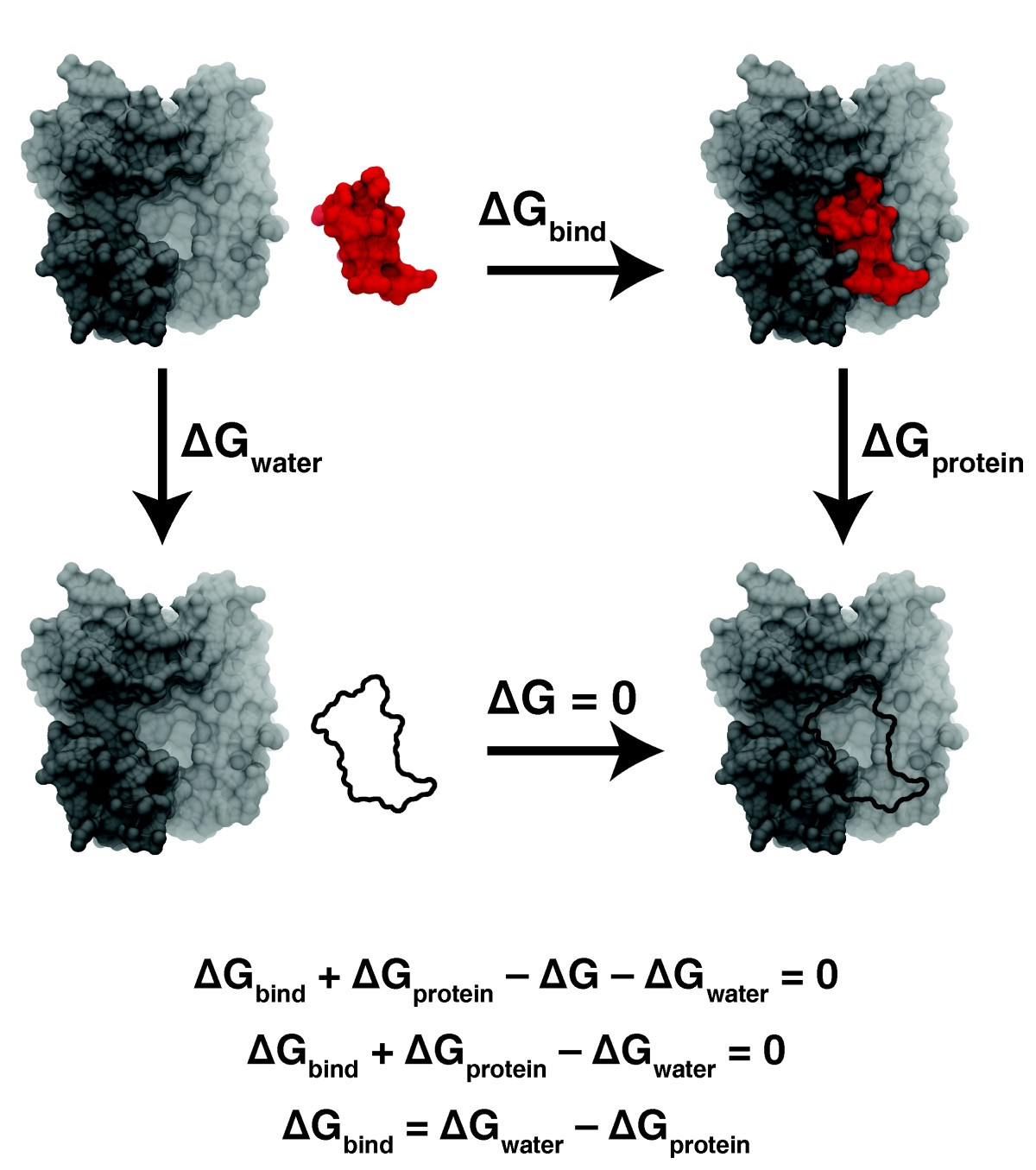 Molecular Dynamics Simulations And Drug Discovery