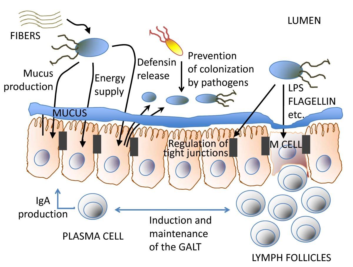 Gut Health A New Objective In Medicine Bmc Medicine