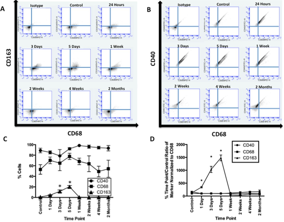 Macrophagic And Microglial Responses After Focal Traumatic Brain 12 V Wiring Diagram 350 Cc 500 Us Canada Version Figure 3