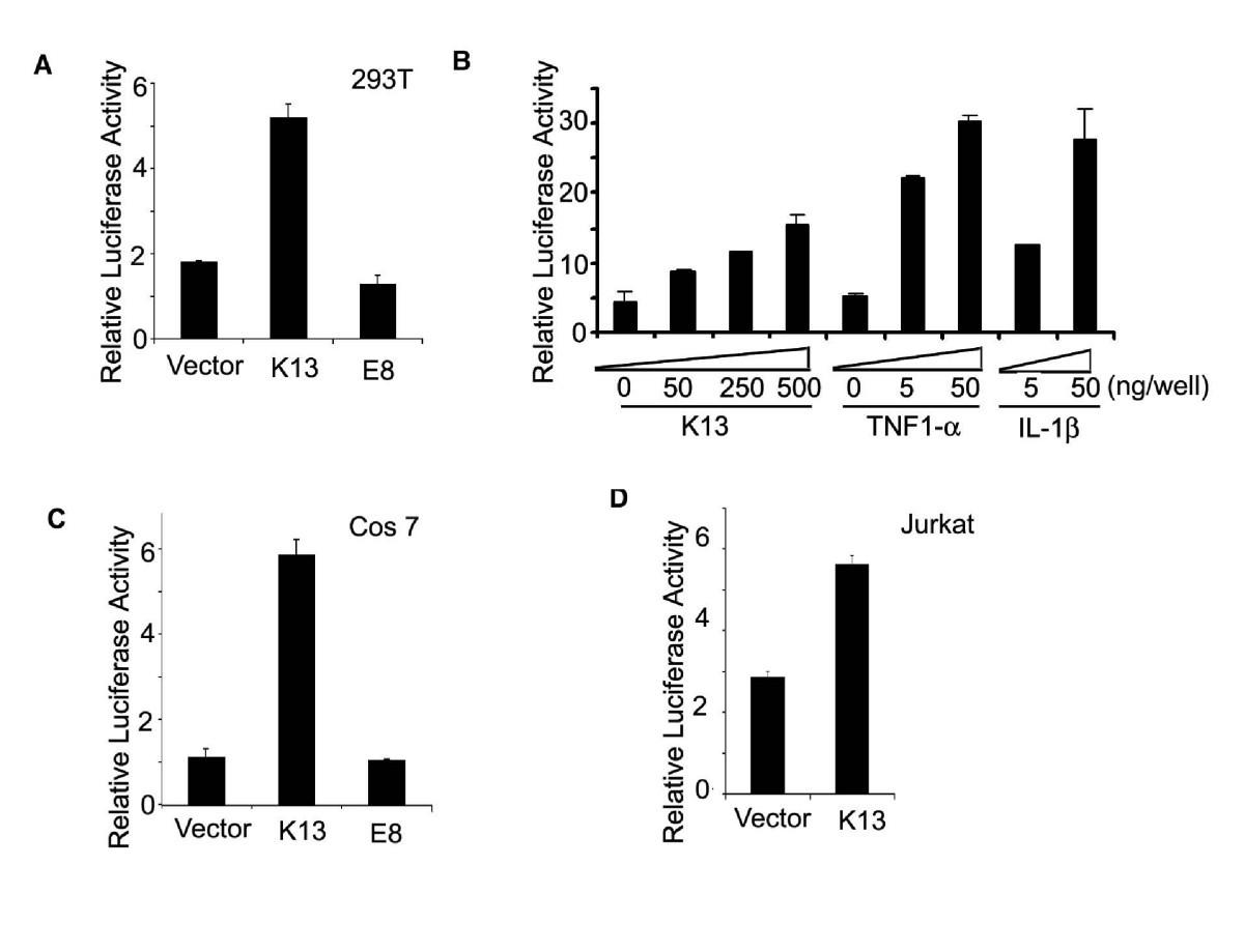 Kaposi's sarcoma associated herpes virus-encoded viral FLICE