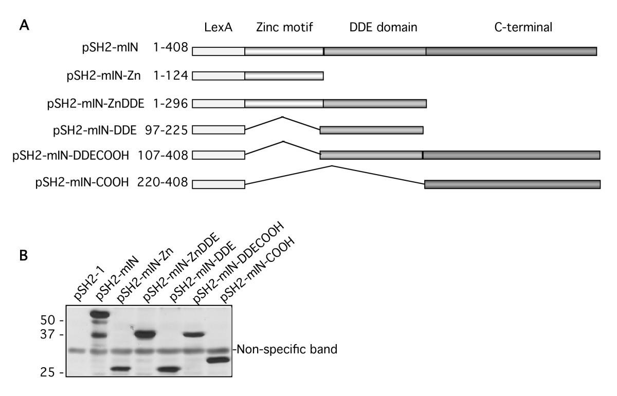 Host Proteins Interacting With The Moloney Murine Leukemia Virus Thread Color Organ Schematic Figure 2