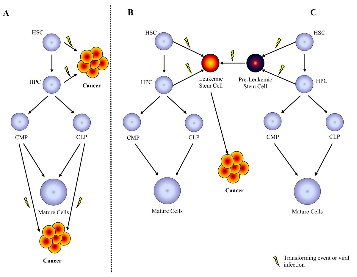 Hematopoietic Stem Cells And Retroviral Infection