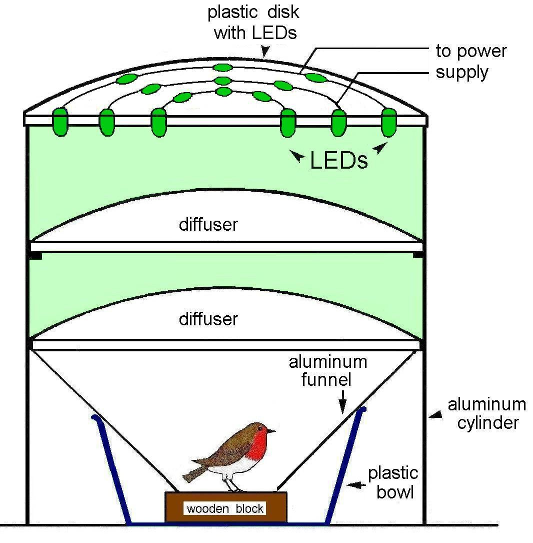 Light Dependent Magnetoreception In Birds Increasing Intensity Of Captive Power Plant Block Diagram Figure 3