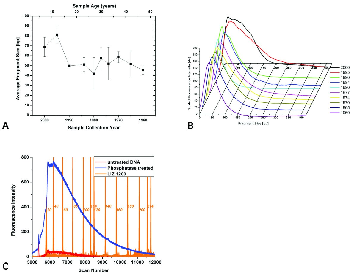 Dna Damage In Preserved Specimens And Tissue Samples A Molecular 2r Ladder D Converter Circuit Performance Optimization For Mixed Figure 1