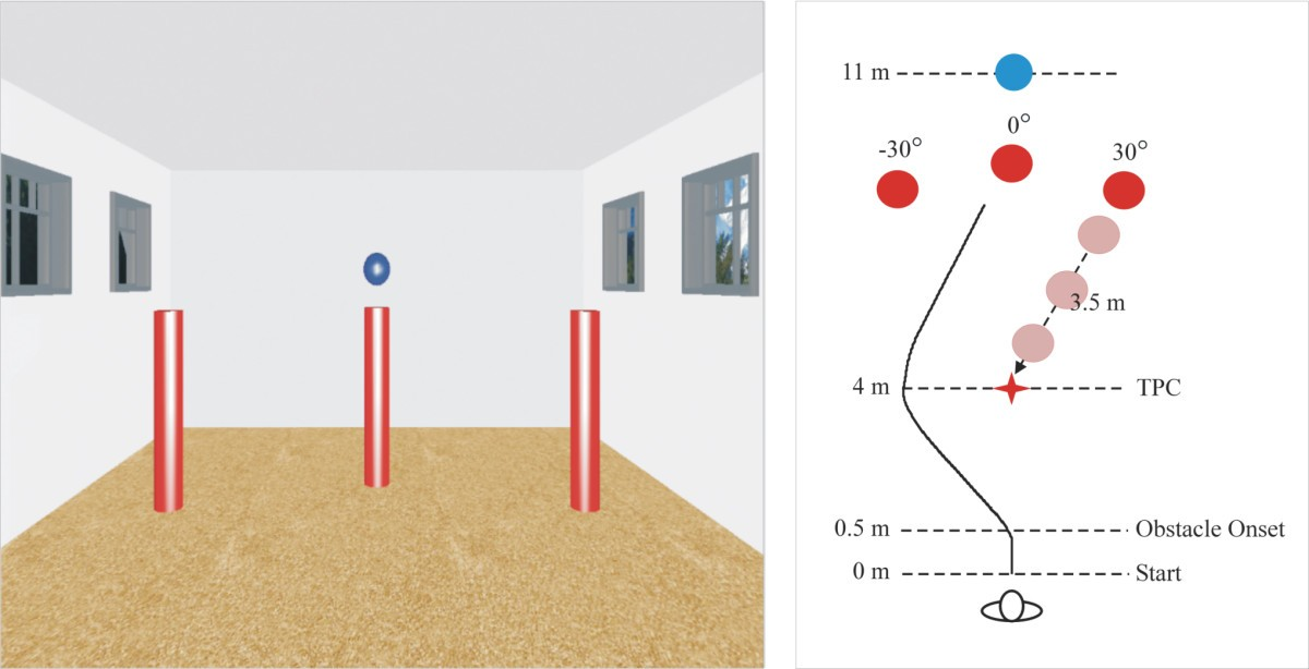 Perceptual and locomotor factors affect obstacle avoidance in ... on