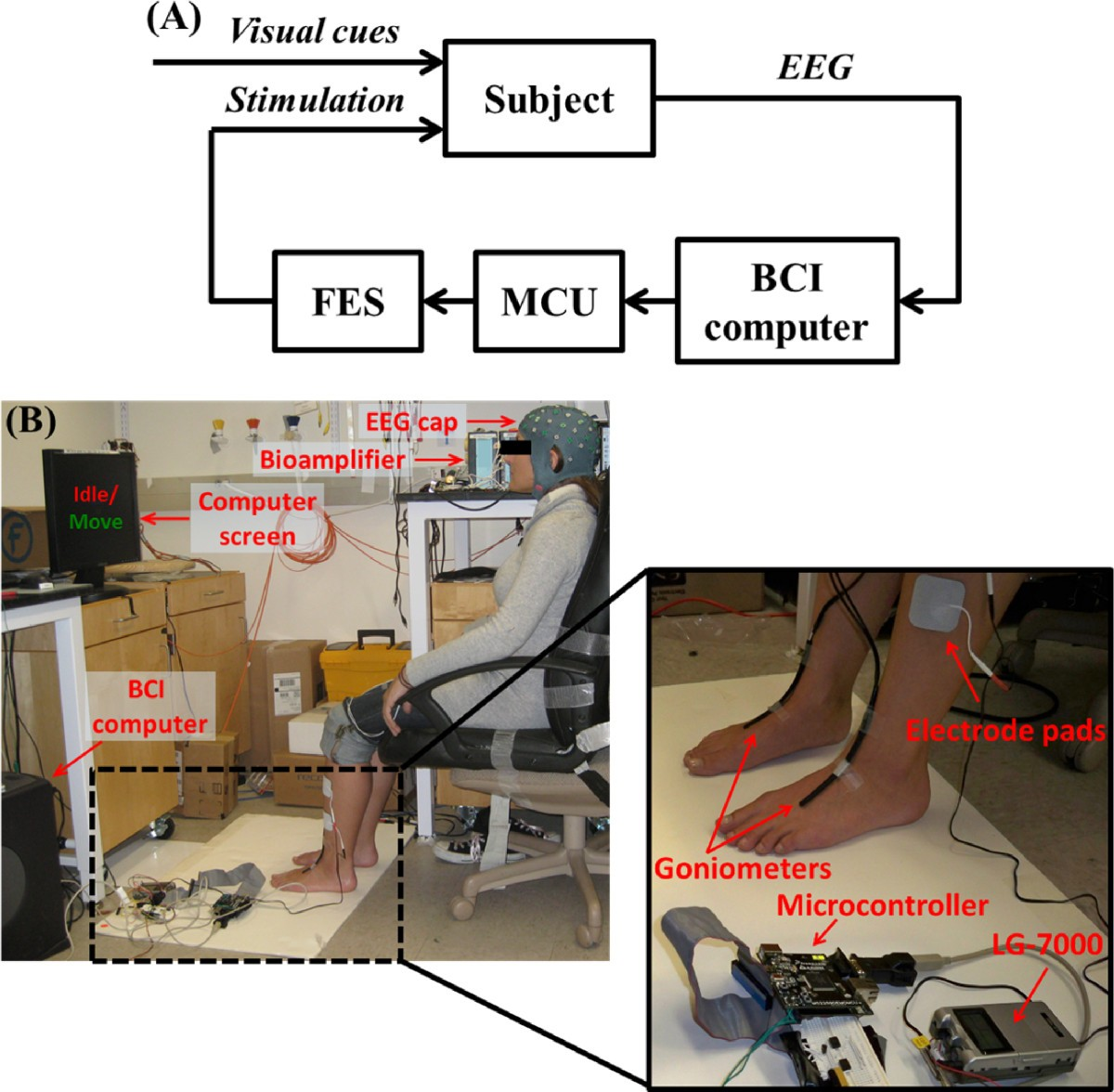 Brain Computer Interface Controlled Functional Electrical Block Diagram Of Eeg Figure 1