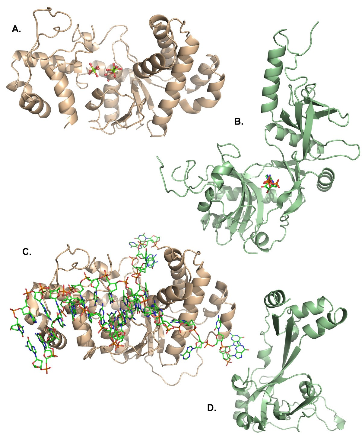 Structural Analysis Of Bacteriophage T4 DNA Replication A
