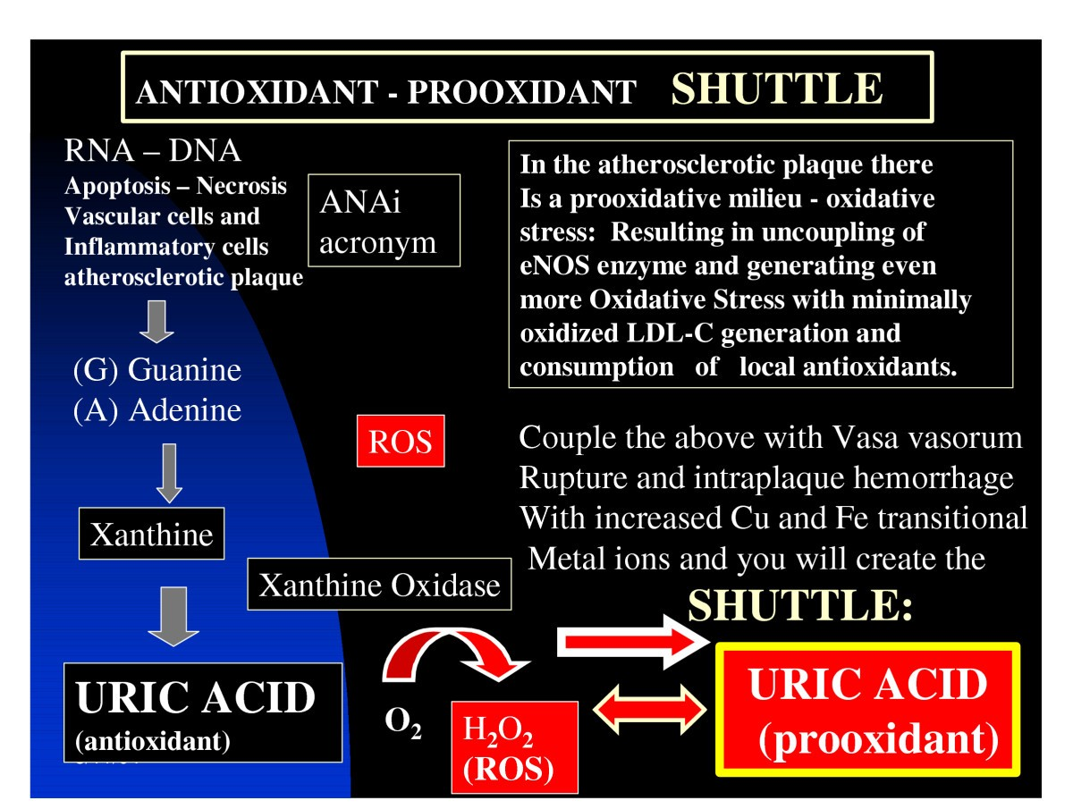 uric acid: a new look at an old risk marker for cardiovascular
