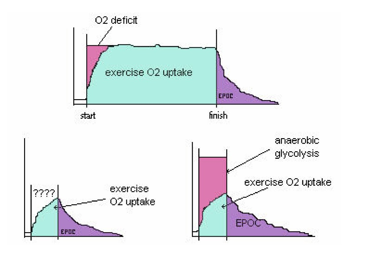 Contribution Of Anaerobic Energy Expenditure To Whole Body Combustion Engine Diagram For Idiots Figure 1