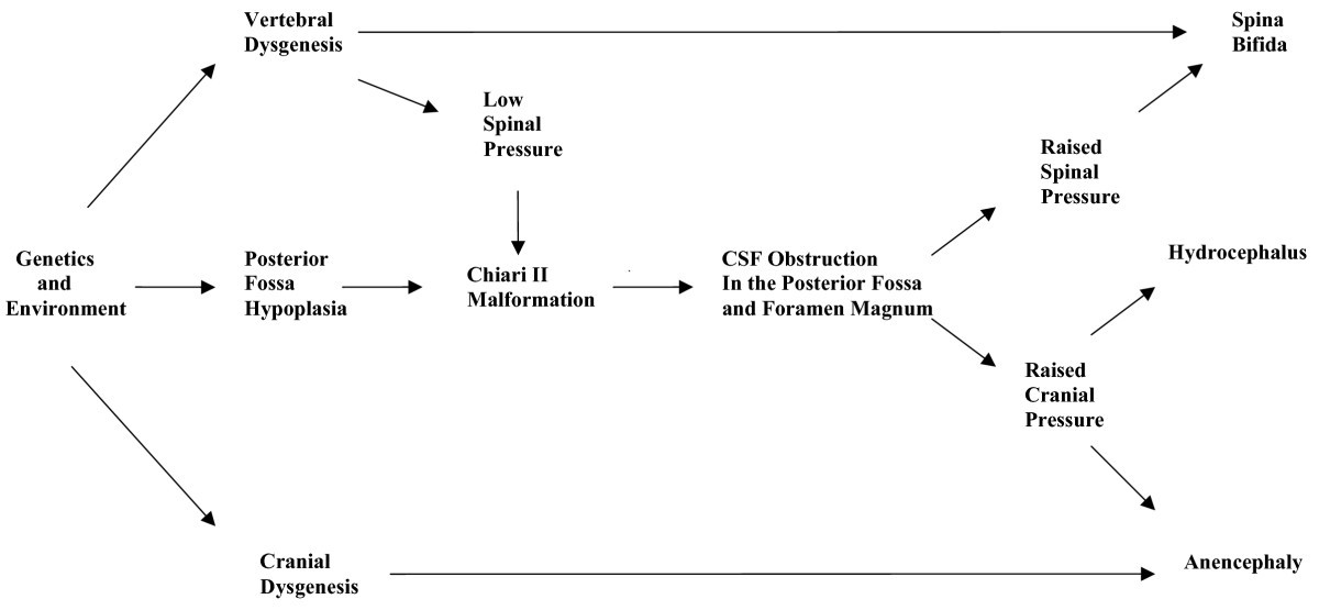 A unifying hypothesis for hydrocephalus, Chiari malformation ...