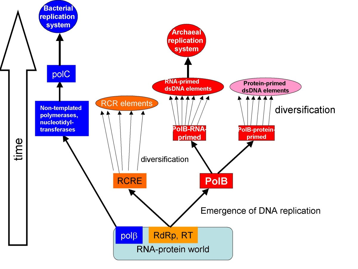 Temporal order of evolution of dna replication systems inferred by figure 1 ccuart Choice Image