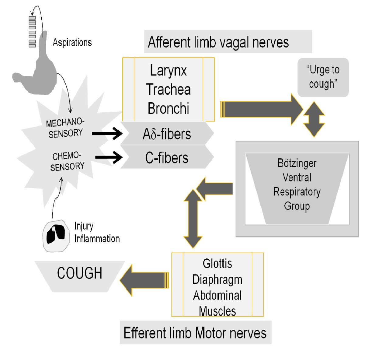 Perspective on the human cough reflex   Cough   Full Text