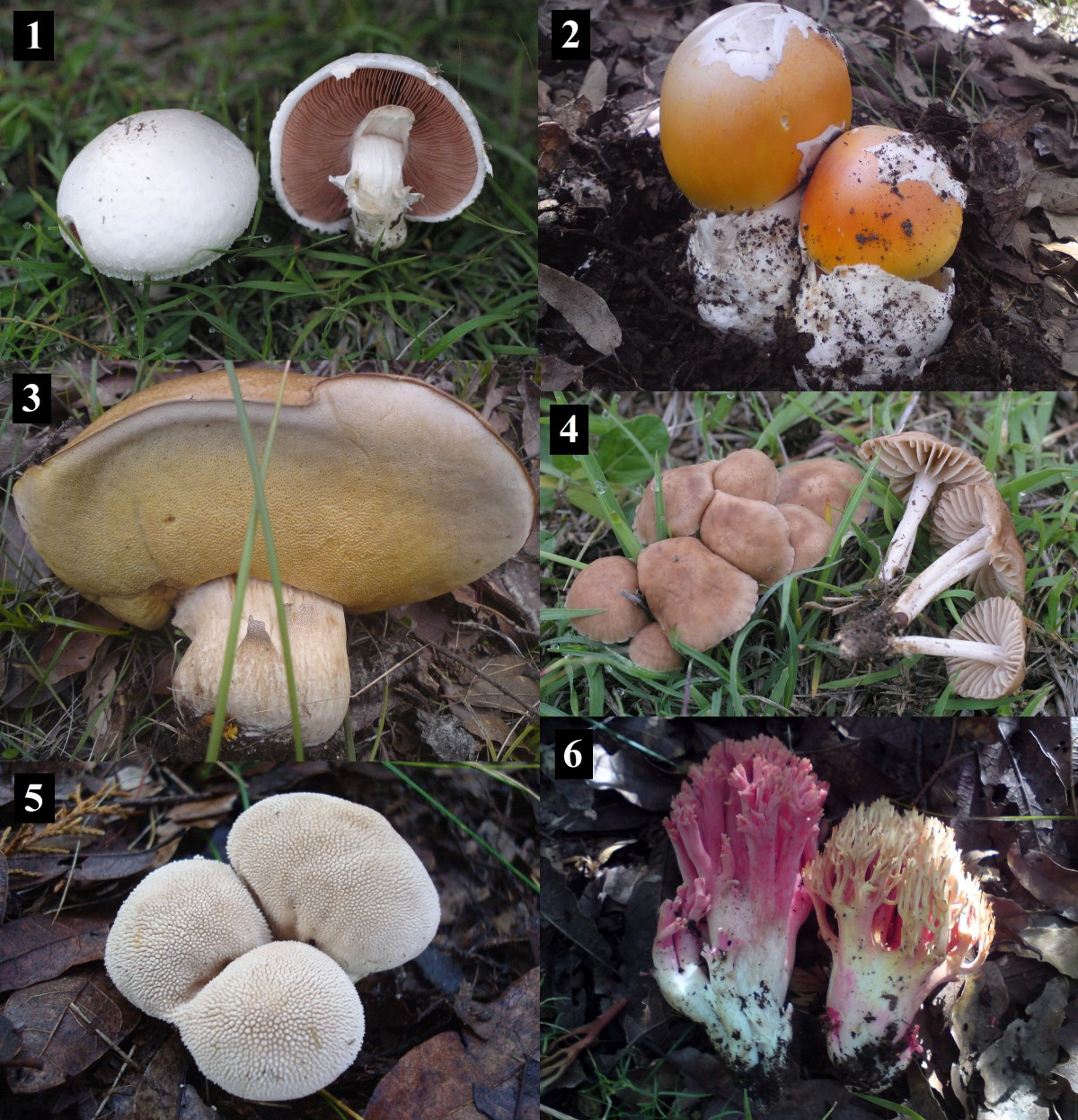 The Cultural Significance Of Wild Mushrooms In San Mateo Huexoyucan