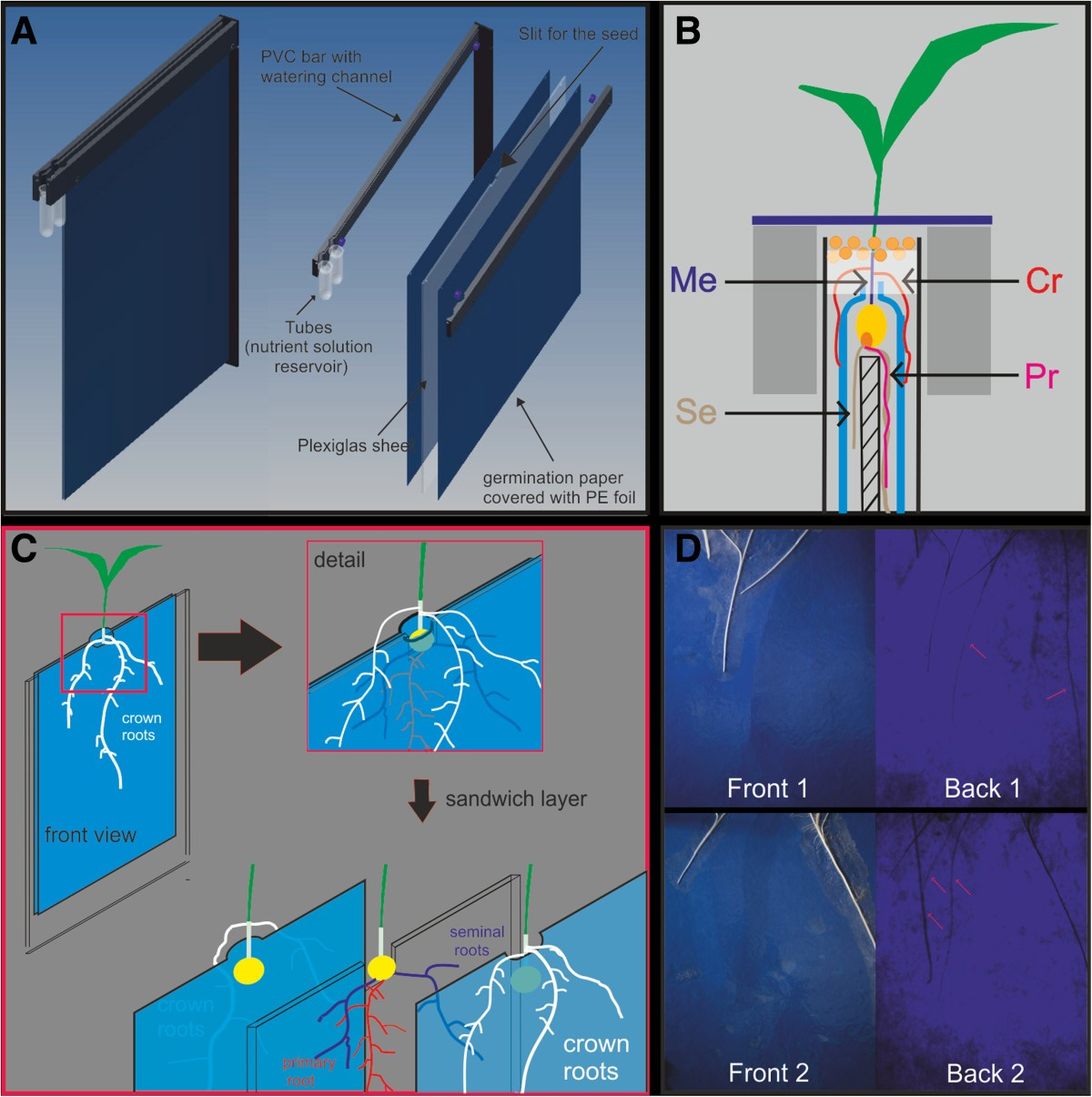 Rhizoslides Paper Based Growth System For Non Destructive High Seed Germination Diagram Monocot Figure 1