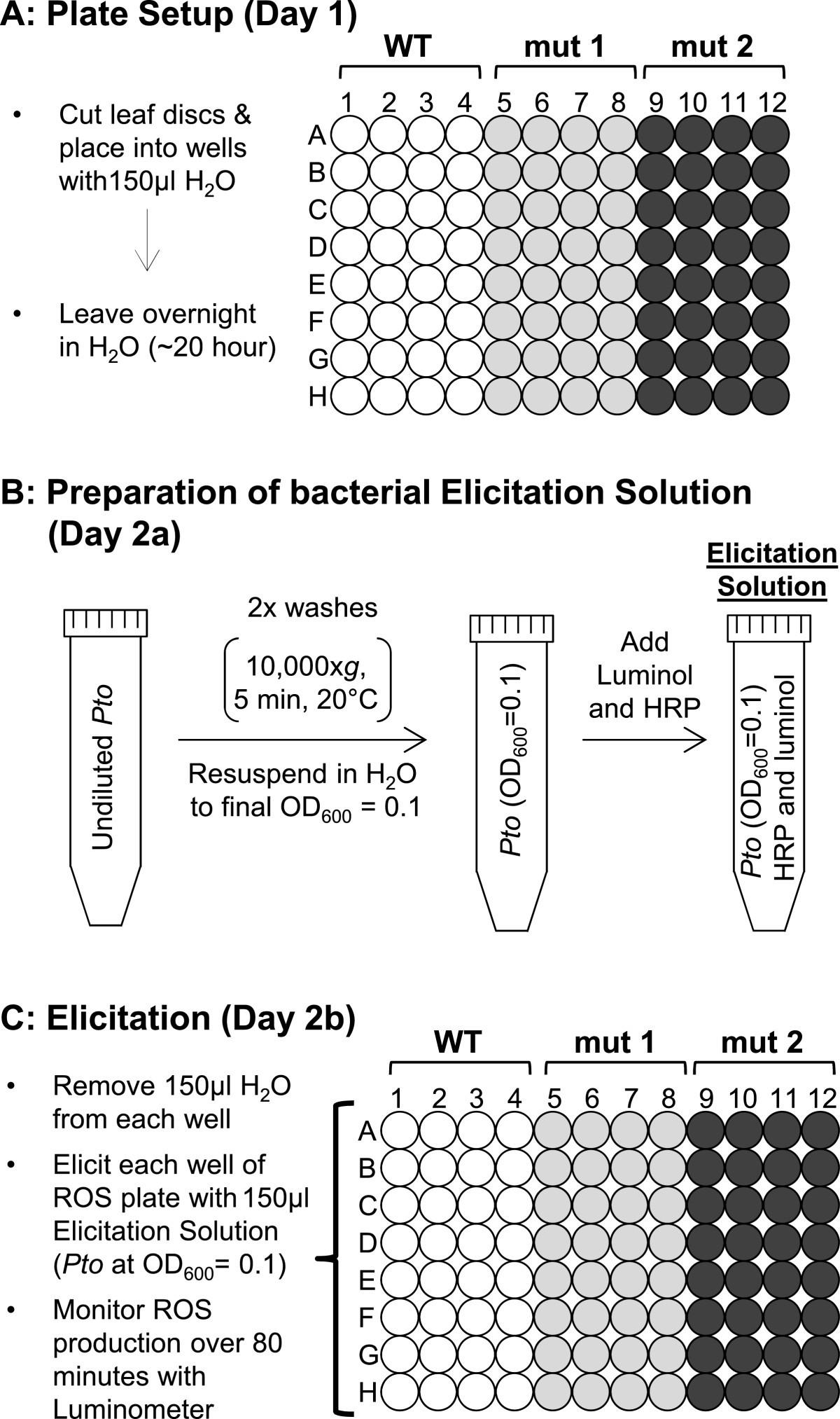 Rapid bioassay to measure early reactive oxygen species production
