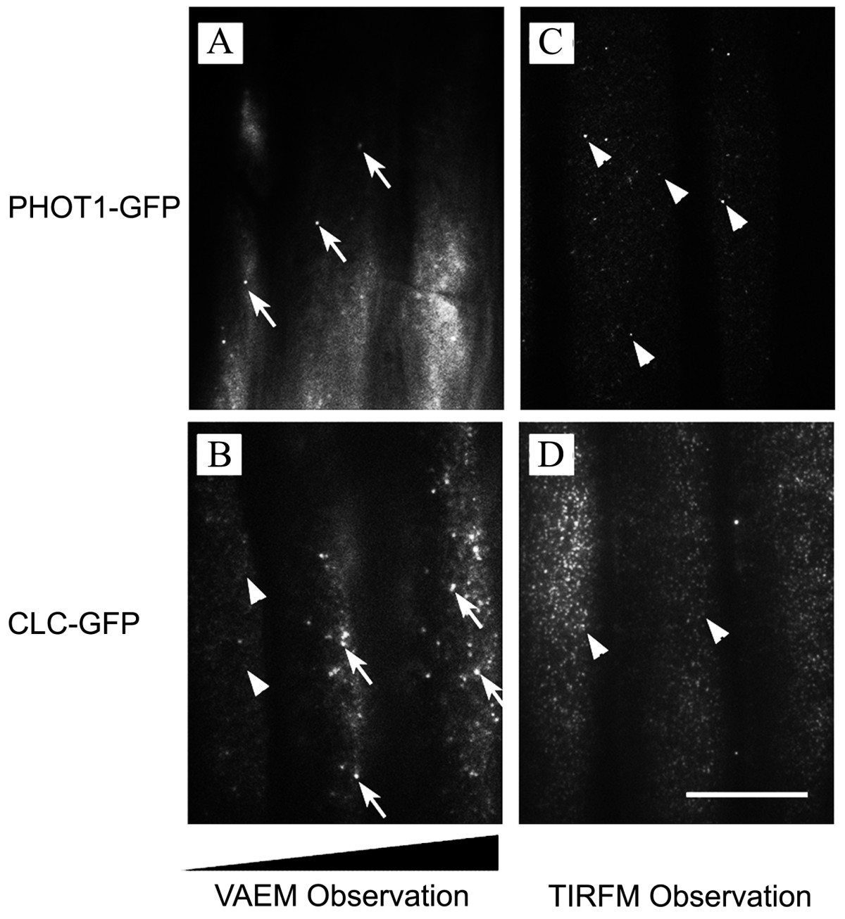 Variable-angle total internal reflection fluorescence microscopy of ...