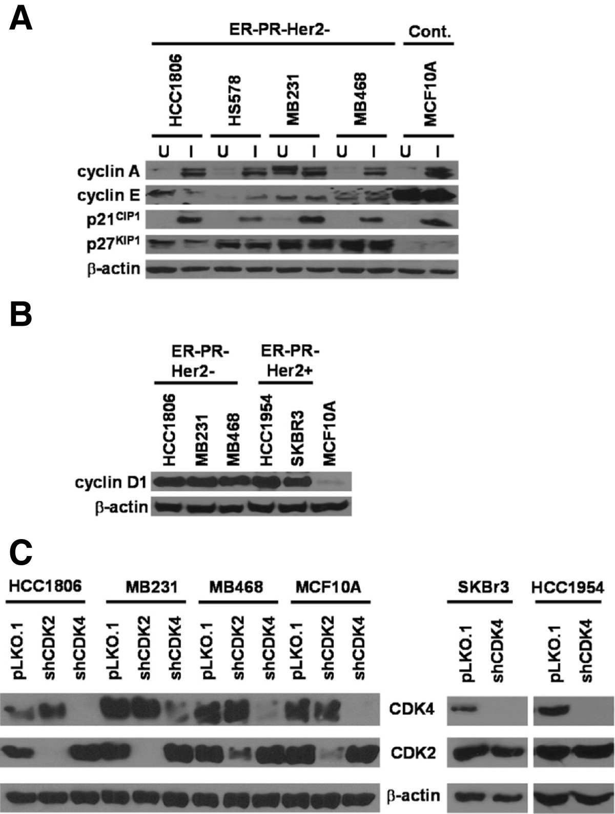 Silencing Cdk4 Radiosensitizes Breast Cancer Cells By Promoting Mk 5894 Figure 1