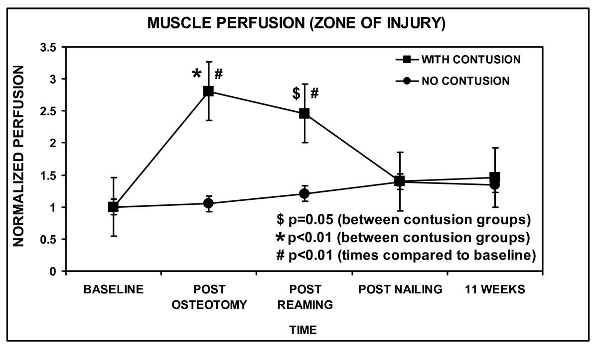 The Effect Of Muscle Contusion On Cortical Bone And Muscle Perfusion